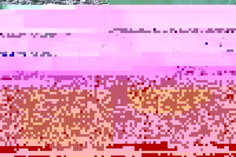 The Body Shop Italian Summer Fig