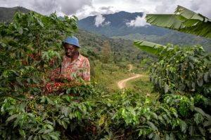 Reviving Origins Nespresso